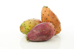 prickly cactusfruitpear Arkivbild