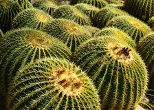 Prickly Golden Balls Royalty Free Stock Photography
