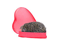 Prickly hedgehog in a gift box in the shape of a heart Royalty Free Stock Images