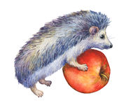 Prickly hedgehog holds red apple in paws. Royalty Free Stock Photos
