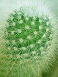 Prickly kaktus arkivfoton
