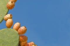 prickly kaktuspear Royaltyfria Bilder