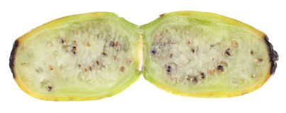 prickly moget för cactaceous fruktpear Royaltyfri Fotografi