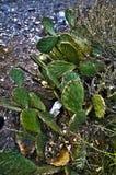 Prickly Stock Photos