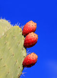 Prickly pair cactus Stock Photo