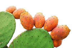 Free Prickly Pear Stock Photos - 21048093