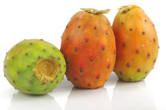 Free Prickly Pear Stock Photo - 21167700