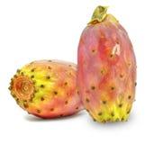 prickly pear Royaltyfria Foton