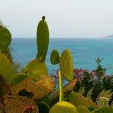 prickly pear Arkivbilder