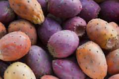 Prickly pear bunch Stock Photo