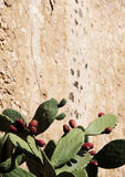 Prickly pear cactus against a wall. A foreshortened view of some prickly pear cactus against an old stone wall, from sicily, space for text on top, portrait cut Royalty Free Stock Photos