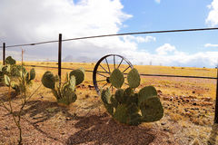 Prickly pear cactus in Arizona. Focus on a prickly pear cactus in Arizona. Deep orange floor and blue sky royalty free stock image