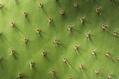 Free Prickly Pear Cactus Detail Stock Image - 57641501