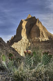 Prickly Pear Cactus and Peaks. Badlands National Park, South Dakota, USA Stock Photos
