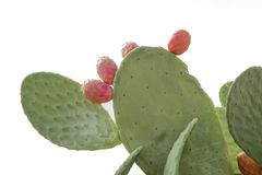 Prickly pear cactus. Close up with fruit stock photos