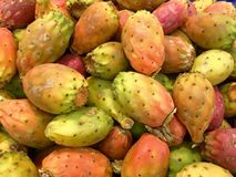 Prickly pear-exotic fruit from america. Multi-colored prickly pear is a cactus fruit growing on a tree-like tree and has a sweetish-acidic flesh Stock Image