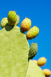 Prickly pear fruit Royalty Free Stock Image