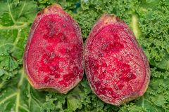 Prickly Pear fruit interior cross section closeup on green kale royalty free stock photography