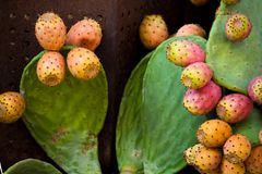 Prickly pear. Natural prickly pear in an exposition in a market place royalty free stock image