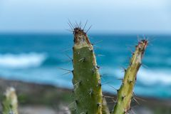 Prickly pear over blue sea and sky Royalty Free Stock Image
