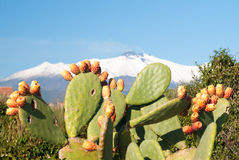 Prickly pear plant with fruits and volcano Etna covered with snow in background Royalty Free Stock Photography