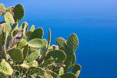 Prickly pear on the sea Stock Photos