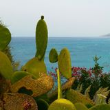 Prickly Pear. And sea, from Tropea Stock Images