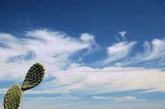 A prickly-pear and the sky ... Stock Photos