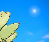 Prickly pear under the sun Stock Photo