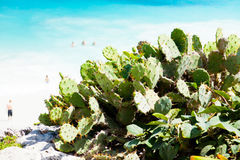 Prickly Pears on the beach Royalty Free Stock Photos