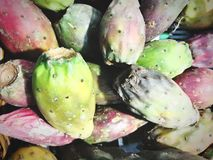 Prickly pears. Closeup of Prickly pears stock photography