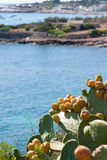 Prickly pears grown up by the sea Stock Photo