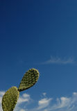 Prickly-pears leaves .. Two prickly leaves against a blue sky in Sicily Stock Photography