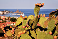 Prickly pears. Prickly pear cactus in Sicily loaded with succulent fruits at the end of the summer. Volcanic coastline in the background Stock Photography