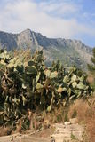 Prickly pears plants & fruits stock image