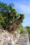 Prickly pears and staircases Royalty Free Stock Images