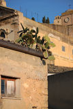 Prickly pearsv. Prickly pears over old town roofs homes Royalty Free Stock Photo