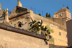 Prickly pearsv. Prickly pears over old town roofs homes Stock Image