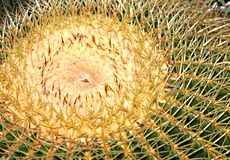 Prickly pillow Royalty Free Stock Photo