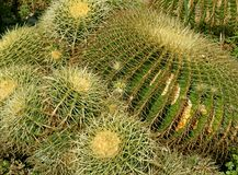 Prickly pillows Royalty Free Stock Photography