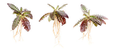Prickly plant Stock Image