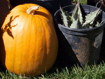 Prickly Pumpkin Stock Photos