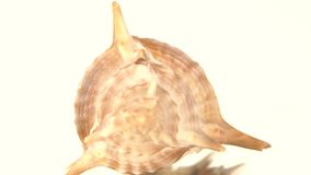 Prickly sea shell on white, rotation, reflection stock footage