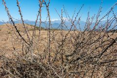 Free Prickly Thorn Bush Royalty Free Stock Photo - 108881785