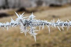prickly tråd Fotografering för Bildbyråer