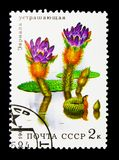 Prickly Water Lily (Euryale ferox), Aquatic flowers serie, circa. MOSCOW, RUSSIA - NOVEMBER 26, 2017: A stamp printed in USSR (Russia) shows royalty free stock photos