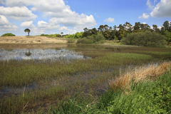 Priddy池塘,萨默塞特英国 免版税图库摄影