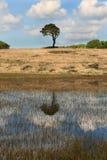 Priddyvijver dichtbij Cheddar, Somerset het UK Stock Foto's