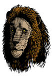 Pride. Lion face in vector representing the pride of the jungle royalty free illustration