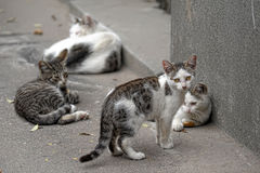 Pride of stray cats Stock Photos